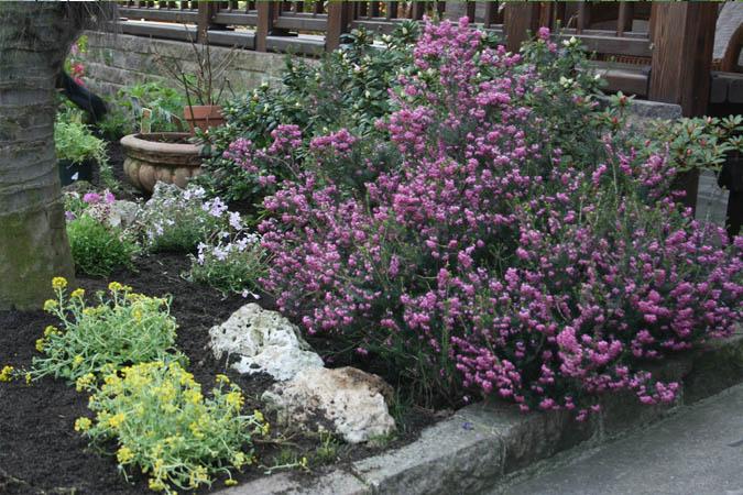 Great aiuole giardini rocciosi milano with aiuole giardini for Decorazioni giardino aiuole