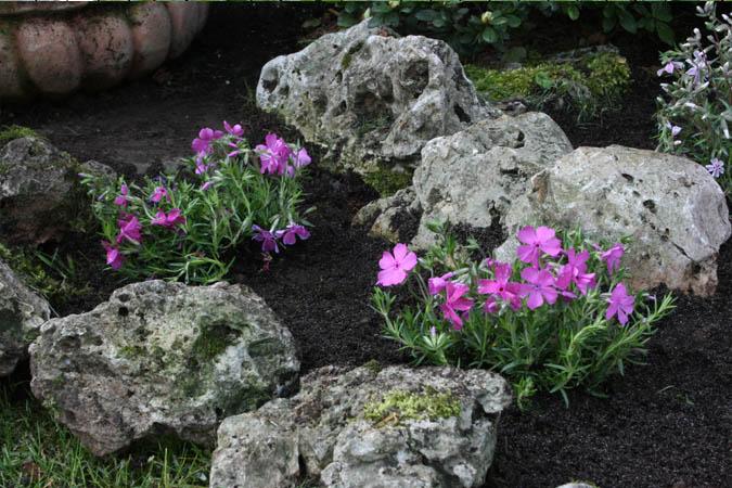 Aiuole con piante perenni pr29 regardsdefemmes for Piante e fiori perenni