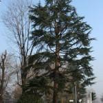 Potatura alberi tree climbing Milano
