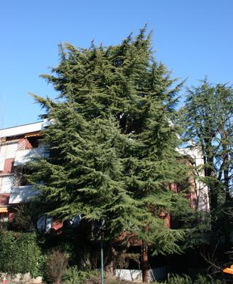 Potatura alberi con piattaforma Milano